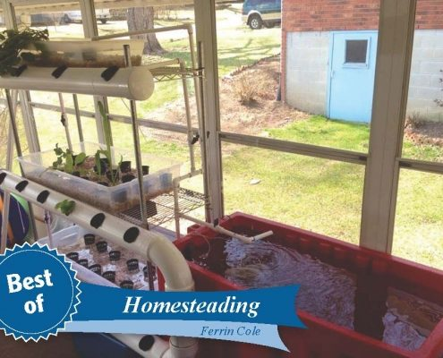 F Cole_aquaponic system_HOMESTEADING